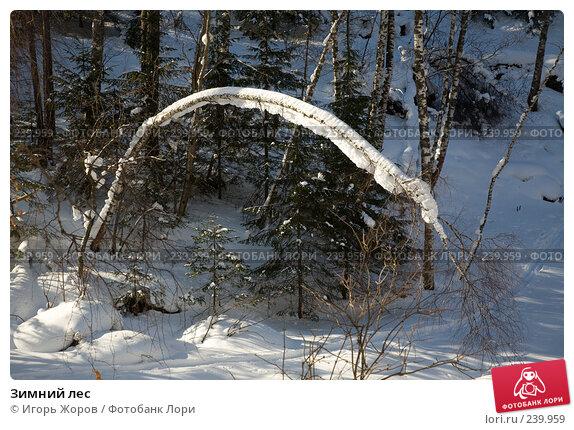 Зимний лес, фото № 239959, снято 11 февраля 2008 г. (c) Игорь Жоров / Фотобанк Лори