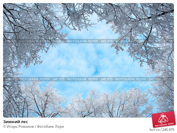 Зимний лес, фото № 245975, снято 9 декабря 2007 г. (c) Игорь Романов / Фотобанк Лори