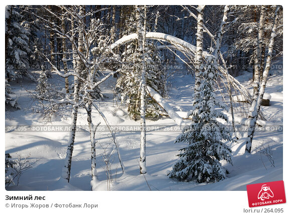 Зимний лес, фото № 264095, снято 19 февраля 2008 г. (c) Игорь Жоров / Фотобанк Лори