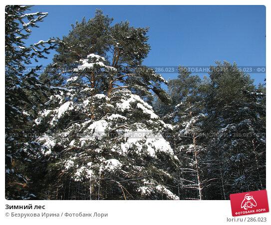 Зимний лес, фото № 286023, снято 24 февраля 2007 г. (c) Безрукова Ирина / Фотобанк Лори