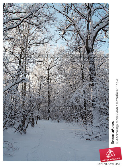 Зимний лес, фото № 291451, снято 31 декабря 2005 г. (c) Александр Максимов / Фотобанк Лори