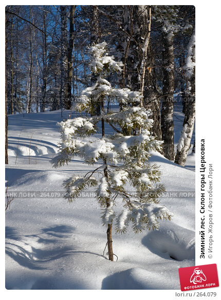 Зимний лес. Склон горы Церковка, фото № 264079, снято 10 февраля 2008 г. (c) Игорь Жоров / Фотобанк Лори