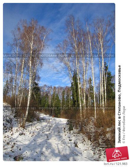 Зимний лес в Степаново, Подмосковье, фото № 121983, снято 4 января 2007 г. (c) Fro / Фотобанк Лори
