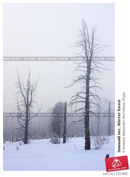Зимний лес. Winter forest, фото № 131443, снято 30 марта 2017 г. (c) Коваль Василий / Фотобанк Лори