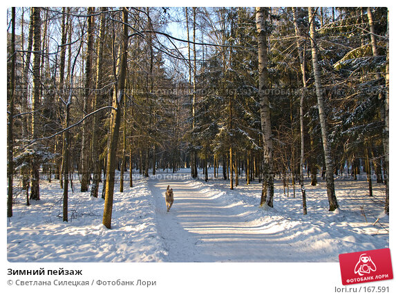 Зимний пейзаж, фото № 167591, снято 7 января 2008 г. (c) Светлана Силецкая / Фотобанк Лори