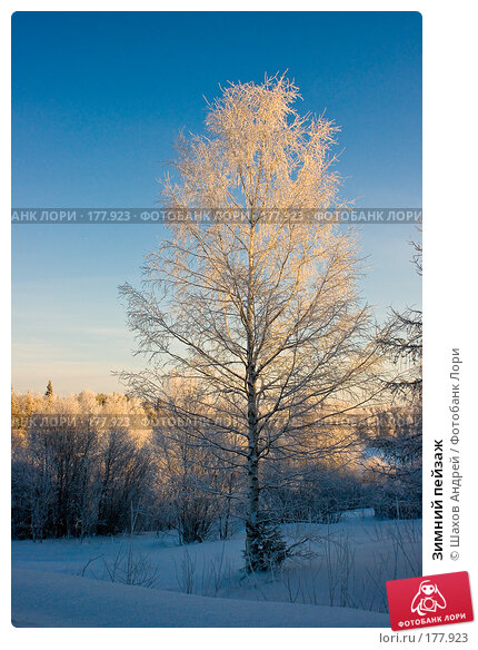 Купить «Зимний пейзаж», фото № 177923, снято 9 января 2008 г. (c) Шахов Андрей / Фотобанк Лори