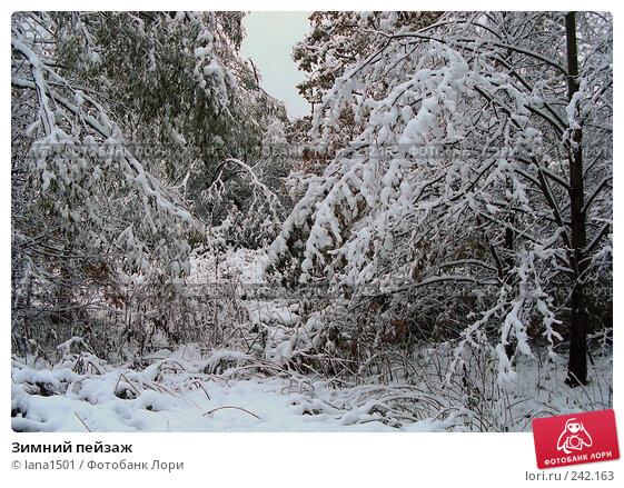 Купить «Зимний пейзаж», эксклюзивное фото № 242163, снято 16 октября 2007 г. (c) lana1501 / Фотобанк Лори