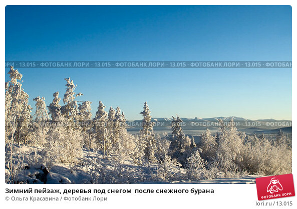 Зимний пейзаж, деревья под снегом  после снежного бурана, фото № 13015, снято 5 ноября 2006 г. (c) Ольга Красавина / Фотобанк Лори