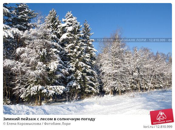 Купить «Зимний пейзаж с лесом в солнечную погоду», эксклюзивное фото № 12810999, снято 18 января 2014 г. (c) Елена Коромыслова / Фотобанк Лори