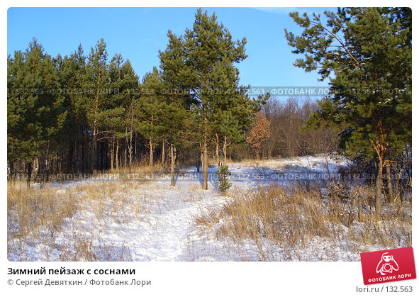 Зимний пейзаж с соснами, фото № 132563, снято 25 ноября 2007 г. (c) Сергей Девяткин / Фотобанк Лори