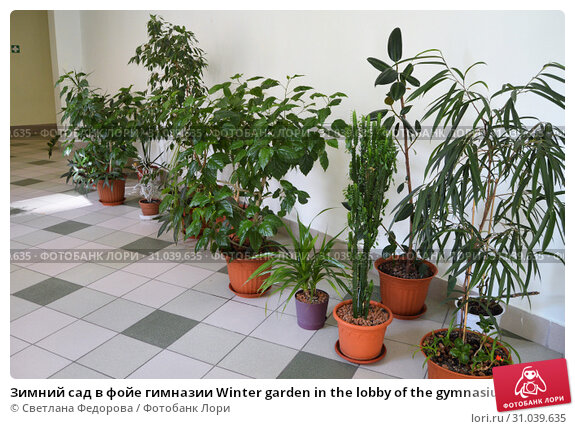 Зимний сад в фойе гимназии Winter garden in the lobby of the gymnasium. Phytodesigner Svetlana Fedorova. Стоковое фото, фотограф Светлана Федорова / Фотобанк Лори