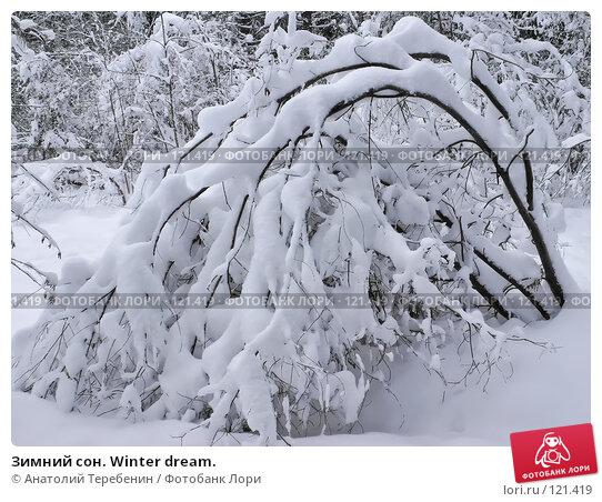 Купить «Зимний сон. Winter dream.», фото № 121419, снято 17 ноября 2007 г. (c) Анатолий Теребенин / Фотобанк Лори