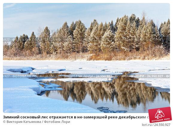 Купить «Зимний сосновый лес отражается в не-замерзшей реке декабрьским солнечным днем», фото № 24550927, снято 11 декабря 2016 г. (c) Виктория Катьянова / Фотобанк Лори