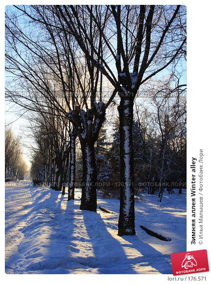 Зимняя аллея Winter alley, фото № 176571, снято 12 января 2008 г. (c) Илья Малышев / Фотобанк Лори