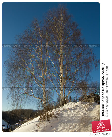 Зимняя береза на ярком солнце, фото № 169471, снято 23 декабря 2007 г. (c) Яков Филимонов / Фотобанк Лори