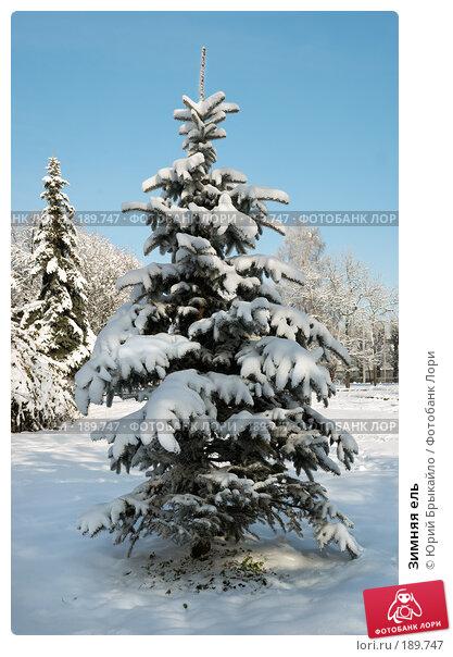 Зимняя ель, фото № 189747, снято 24 января 2017 г. (c) Юрий Брыкайло / Фотобанк Лори