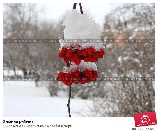 Купить «Зимняя рябина», фото № 136051, снято 23 ноября 2007 г. (c) Александр Литовченко / Фотобанк Лори