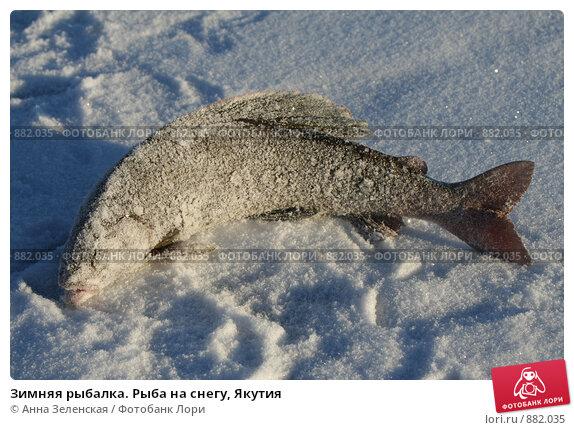 все для зимней рыбалки интернет