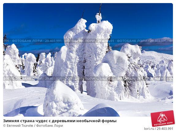 Купить «Зимняя страна чудес с деревьями необычной формы», фото № 29403991, снято 14 марта 2015 г. (c) Евгений Ткачёв / Фотобанк Лори
