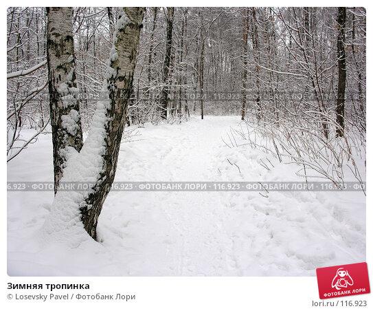 Купить «Зимняя тропинка », фото № 116923, снято 24 февраля 2006 г. (c) Losevsky Pavel / Фотобанк Лори