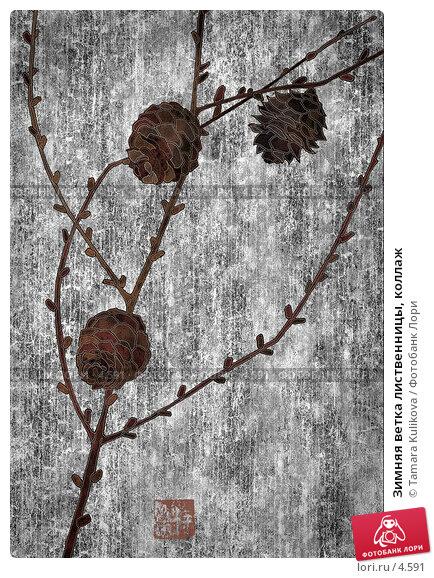 Зимняя ветка лиственницы, коллаж, иллюстрация № 4591 (c) Tamara Kulikova / Фотобанк Лори