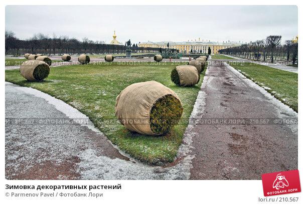 Зимовка декоративных растений, фото № 210567, снято 13 февраля 2008 г. (c) Parmenov Pavel / Фотобанк Лори