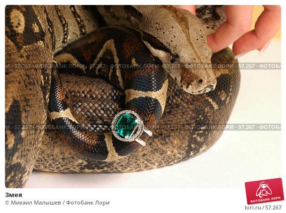 Купить «Змея», фото № 57267, снято 19 марта 2006 г. (c) Михаил Малышев / Фотобанк Лори