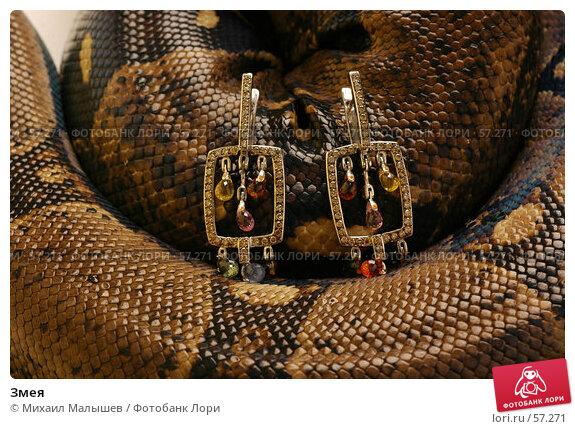 Змея, фото № 57271, снято 19 марта 2006 г. (c) Михаил Малышев / Фотобанк Лори