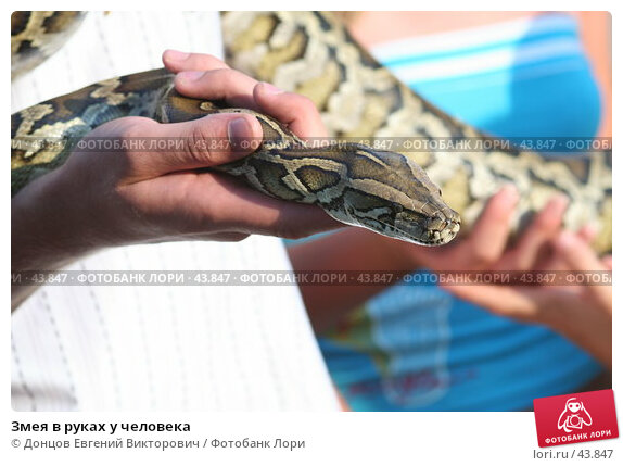 Змея в руках у человека, фото № 43847, снято 7 августа 2006 г. (c) Донцов Евгений Викторович / Фотобанк Лори