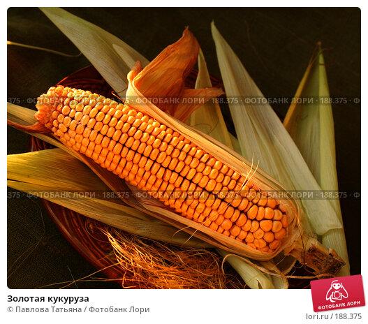 Золотая кукуруза, фото № 188375, снято 25 августа 2007 г. (c) Павлова Татьяна / Фотобанк Лори