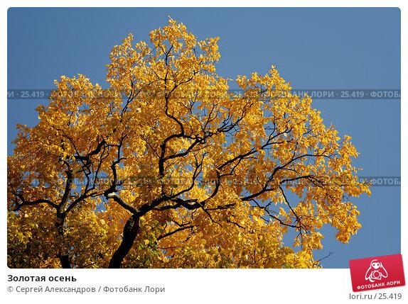 Золотая осень, фото № 25419, снято 24 сентября 2006 г. (c) Сергей Александров / Фотобанк Лори