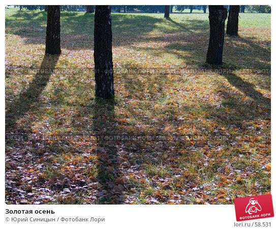 Золотая осень, фото № 58531, снято 16 октября 2004 г. (c) Юрий Синицын / Фотобанк Лори