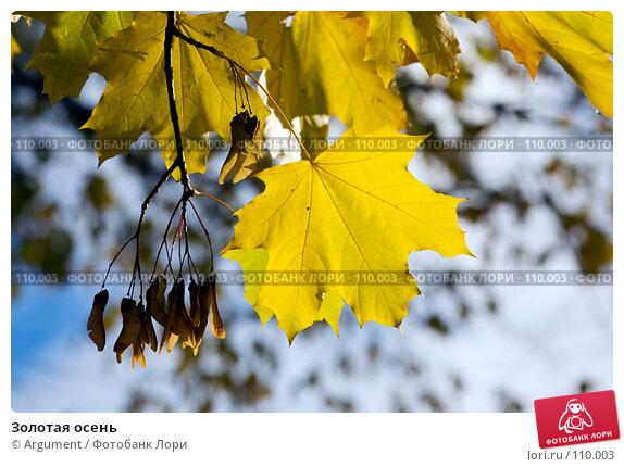 Золотая осень, фото № 110003, снято 20 октября 2007 г. (c) Argument / Фотобанк Лори