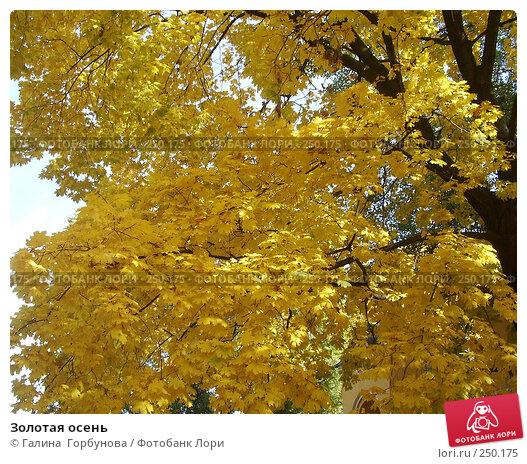 Золотая осень, фото № 250175, снято 28 октября 2016 г. (c) Галина  Горбунова / Фотобанк Лори