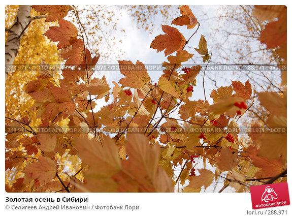 Золотая осень в Сибири, фото № 288971, снято 1 октября 2006 г. (c) Селигеев Андрей Иванович / Фотобанк Лори