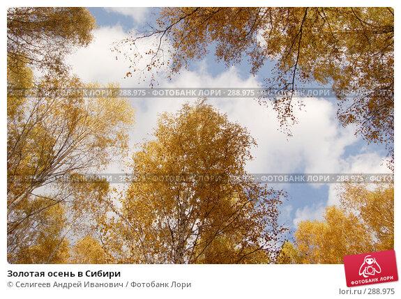 Золотая осень в Сибири, фото № 288975, снято 1 октября 2006 г. (c) Селигеев Андрей Иванович / Фотобанк Лори
