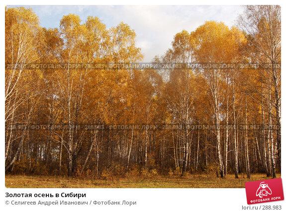 Золотая осень в Сибири, фото № 288983, снято 1 октября 2006 г. (c) Селигеев Андрей Иванович / Фотобанк Лори
