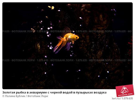 Золотая рыбка в аквариуме с черной водой в пузырьках воздуха. Стоковое фото, фотограф Полина Бублик / Фотобанк Лори