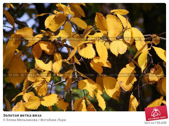 Золотая ветка вяза, фото № 93639, снято 23 сентября 2007 г. (c) Елена Мельникова / Фотобанк Лори