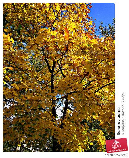 Золото листвы, фото № 257595, снято 25 сентября 2005 г. (c) Марина / Фотобанк Лори