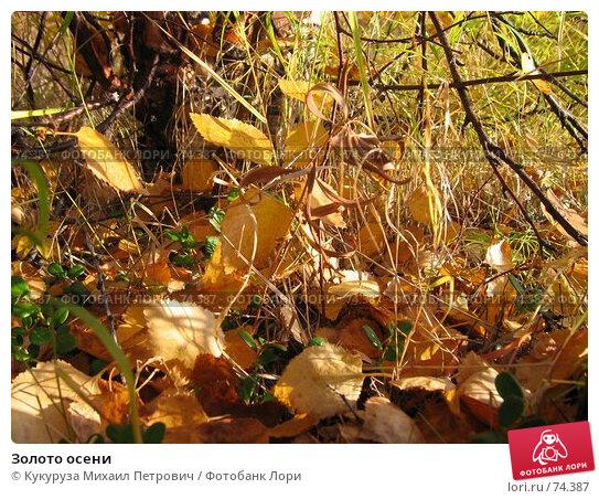 Купить «Золото осени», фото № 74387, снято 31 августа 2005 г. (c) Кукуруза Михаил Петрович / Фотобанк Лори