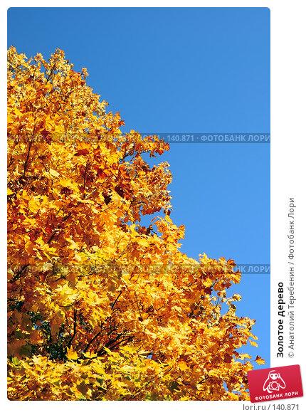 Золотое дерево, фото № 140871, снято 23 сентября 2007 г. (c) Анатолий Теребенин / Фотобанк Лори