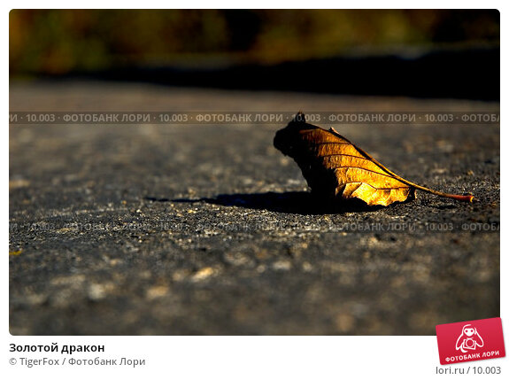 Золотой дракон, фото № 10003, снято 9 октября 2005 г. (c) TigerFox / Фотобанк Лори