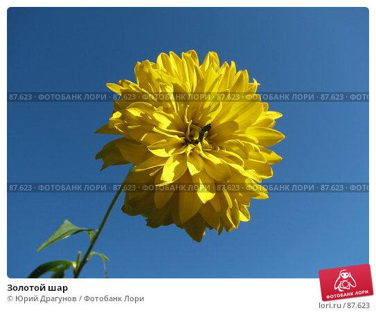 Золотой шар, фото № 87623, снято 23 сентября 2007 г. (c) Юрий Драгунов / Фотобанк Лори