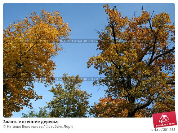 Золотые осенние деревья, фото № 201163, снято 23 сентября 2007 г. (c) Наталья Белотелова / Фотобанк Лори