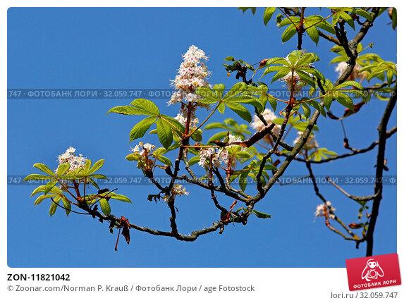 ZON-11821042. Стоковое фото, фотограф Zoonar.com/Norman P. Krauß / age Fotostock / Фотобанк Лори
