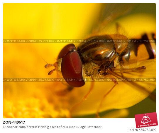 ZON-449617. Стоковое фото, фотограф Zoonar.com/Kerstin Hennig / age Fotostock / Фотобанк Лори