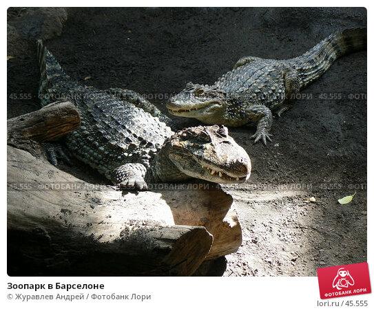 Зоопарк в Барселоне, эксклюзивное фото № 45555, снято 21 сентября 2006 г. (c) Журавлев Андрей / Фотобанк Лори