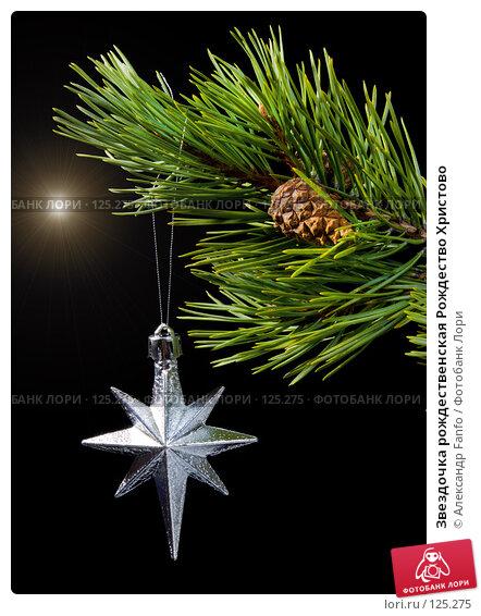 Звездочка рождественская Рождество Христово, фото № 125275, снято 28 июля 2017 г. (c) Александр Fanfo / Фотобанк Лори